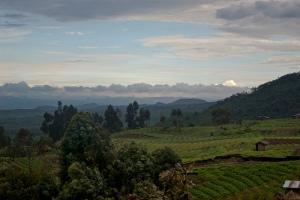 Democratic Republic of the Congo Landscape