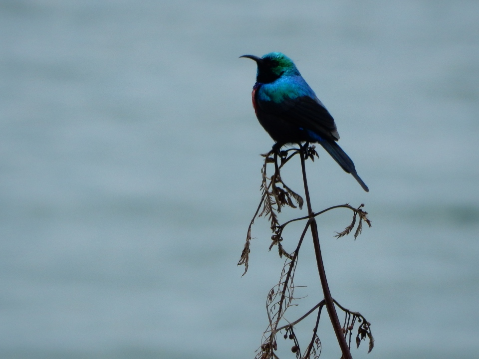 My favorite photo from 'field trip'... bird with Lake Kivu as background.