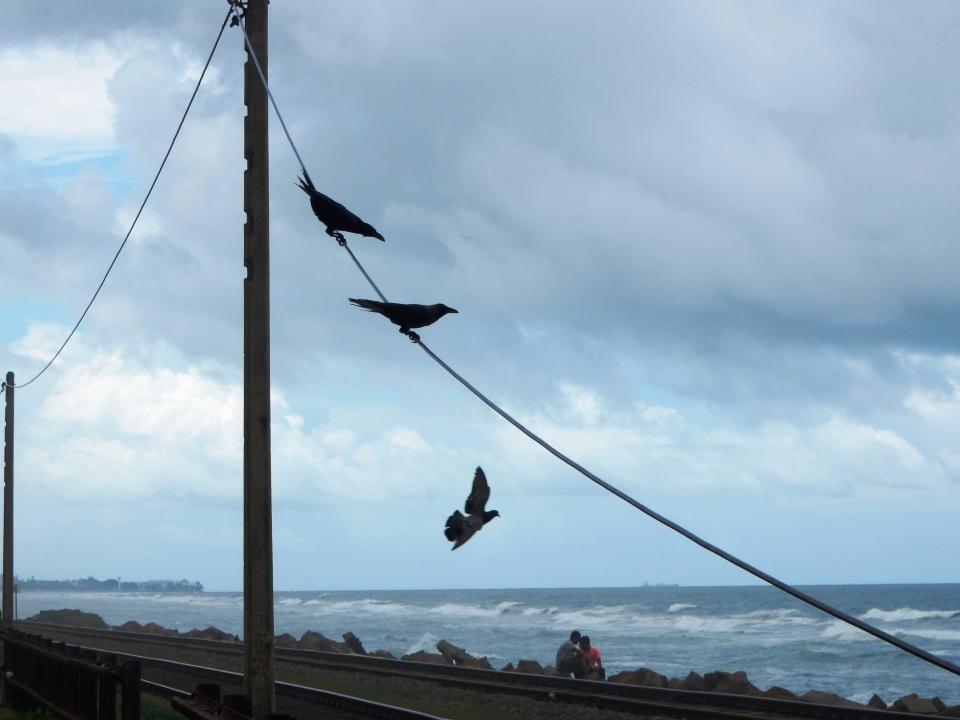 Birds of the Indian Ocean.