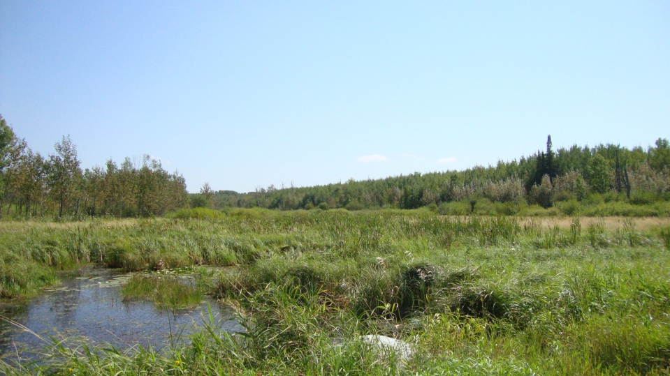 Marsh, woods, creeks, lakes.